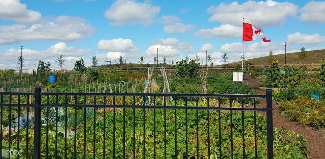 Griesbach Community Garden