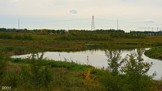 Get Back to Nature: 142 Street and 153 Avenue Edmonton