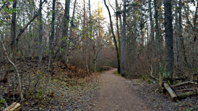 Get Back to Nature: Kinnaird Ravine, Edmonton