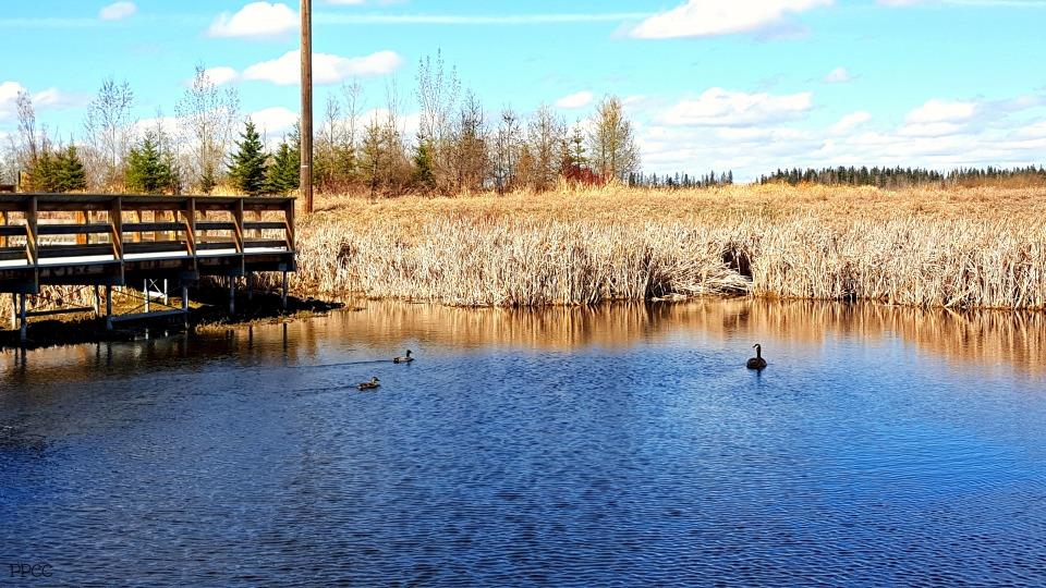 Get Back to Nature: Lois Hole Centennial Provincial Park
