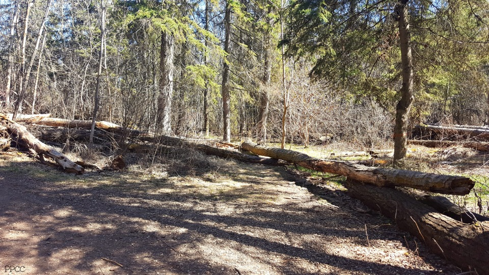 Get Back To Nature: Upper Mill Creek Ravine