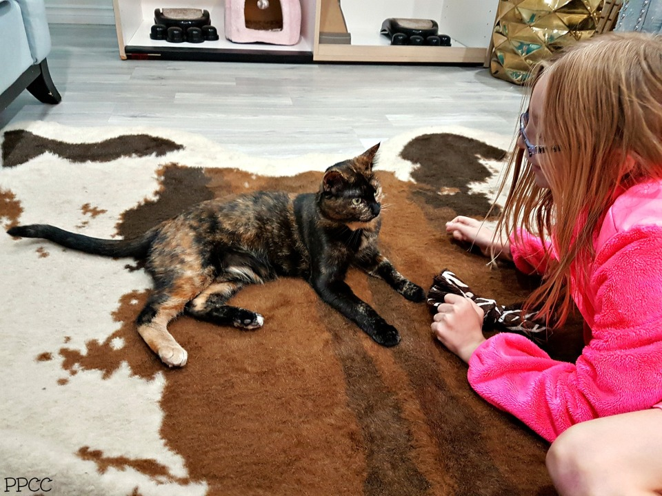 Kid's Hour at the Cat Cafe on Whyte